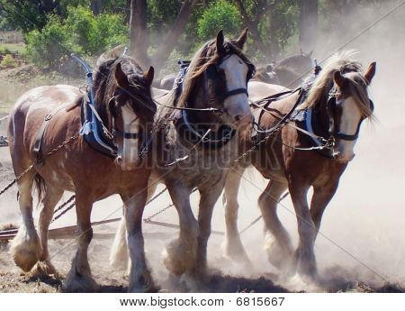 Beautiful Team of Clydesdales