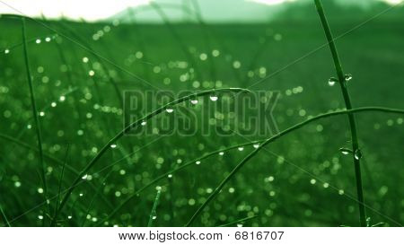 dew on the green plant