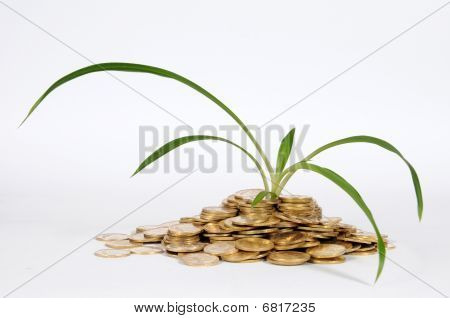 financial fertilizer