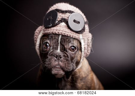 French bulldog puppy in knit pilot helmet