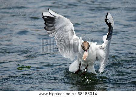 Wings spread hunter