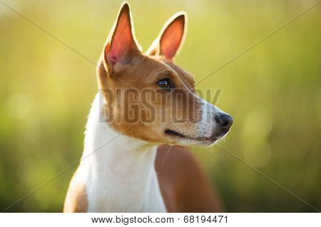 Photographed Closeup Muzzle Red Dog