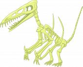 picture of pterodactyl  - Vector illustration of Pterodactyl skeleton isolated on white - JPG