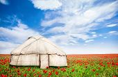 picture of nomads  - Urta nomadic house around poppy flowers on the field at spring time in central Asia - JPG