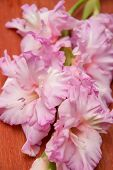 stock photo of gladiolus  - BrBranch of pink gladiolus on wooden background - JPG