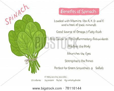 vector cartoon hand drawn spinach health benefits
