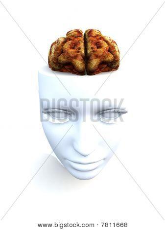 Open Top anatomische Head