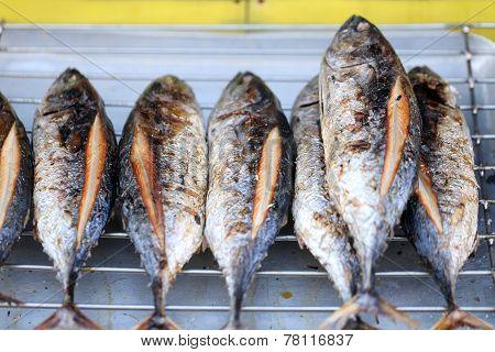 Grilled Bonito Fish.