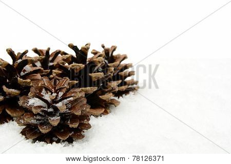 Group Of Christmas Pine Cones On Snow At Corner