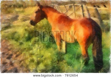 Illustration, Horse
