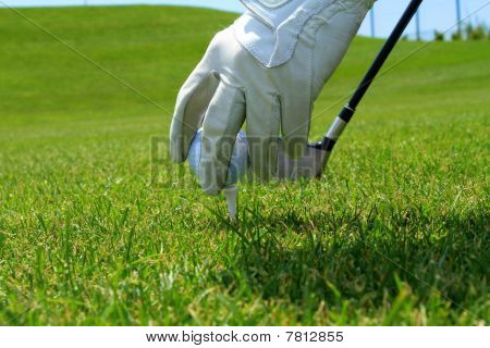 Golfer's Hand On Tee Placing Ball