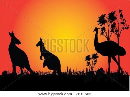 Kangaroo And Emu In The Sunset