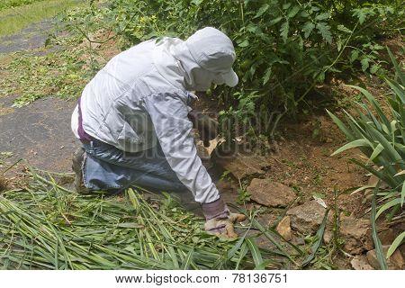 Organic Garden Weeding