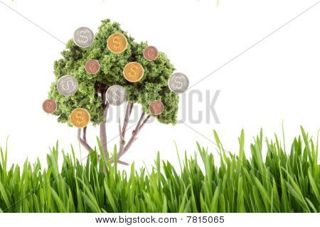 Money Growing On Tree With Grass