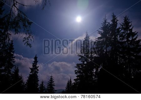 Starry Night And Dark Forest. Carpathisn Mountains
