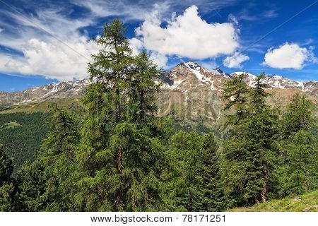 Trentino - High Pejo Valley