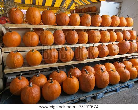 Many Pumpkins For Halloween