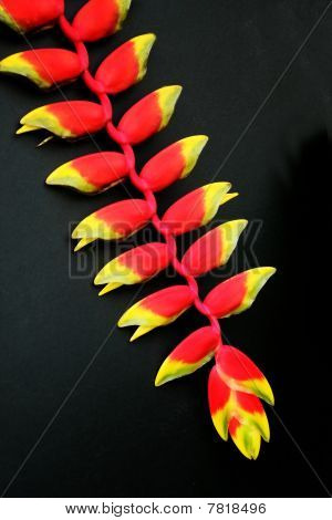 Heliconia In Black