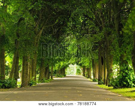 Sidewalk Walking Pavement In Park. Nature Landscape.