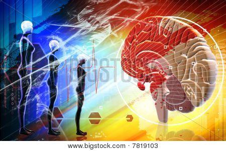 Brain and human body