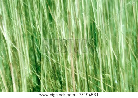 Nature in abstract, green grass in motion blur