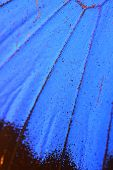 stock photo of blue butterfly  - Macro close up of blue Butterfly Wing - JPG