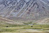 stock photo of feeding horse  - Horses Feeding On Pasture In High Mountains - JPG