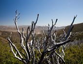 picture of anza  - Anza Borrego desert and state park with the city of Borrego Springs in the valley framed by dead twigs - JPG