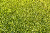 stock photo of manicured lawn  - Manicured green lawn lit by the setting sun - JPG