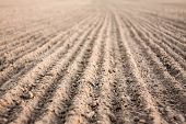 image of plowed field  - Background Of Newly Plowed Field Ready For New Crops - JPG