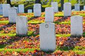 pic of arlington cemetery  - Arlington National Cemetery gravestones in autumn  - JPG