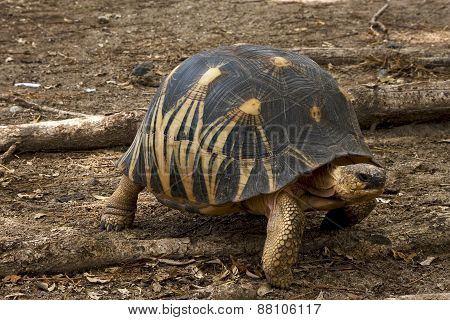Turtle In Earth
