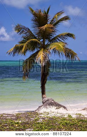 Palm In The Wind In The Blue Lagoon
