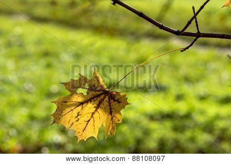 an autumn leaf on a tree