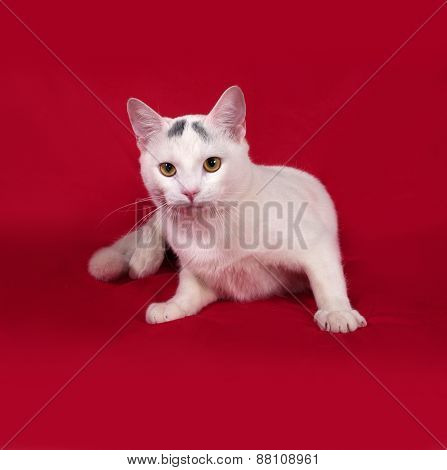 White Cat With Gray Spots Sitting On Red