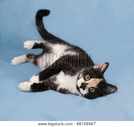 Tricolor Kitten With Toys Lying On Blue