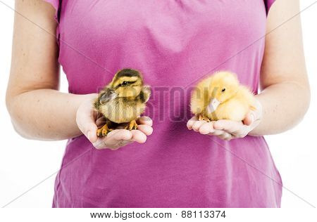 Two Different Ducklings