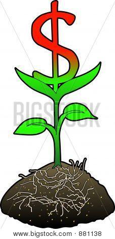 Wachstum Dollarsymbol