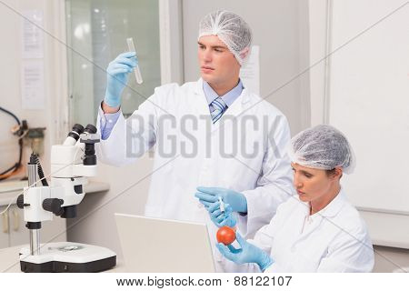 Scientists examining tomato in laboratory