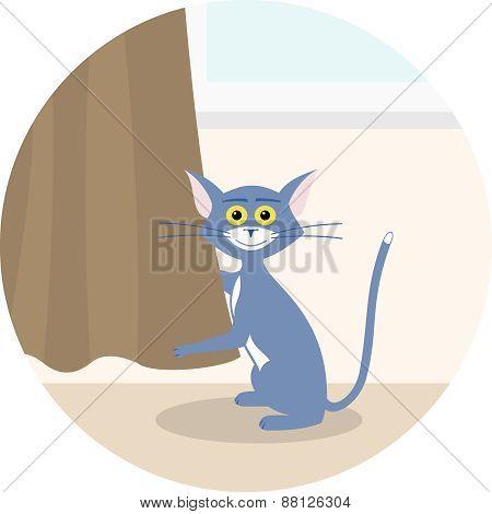 Cat Curtain Spoils