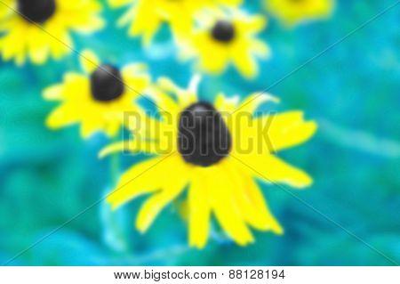Background Image - Black Eyed Susan
