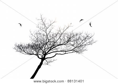 Silhouette Of Lonely Tree And Bird Isolated