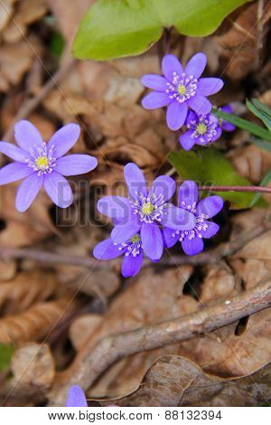 the beautiful first flowers grow by a spring