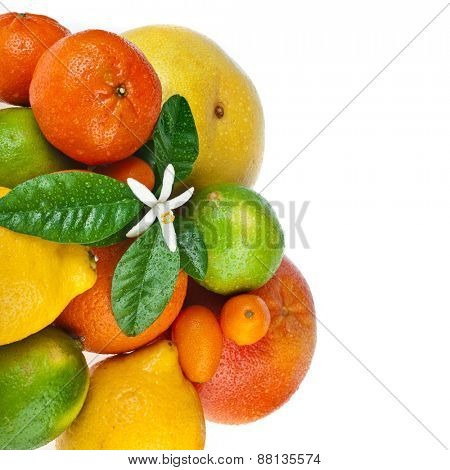 Beautiful citrus fruits with flower isolated on white background