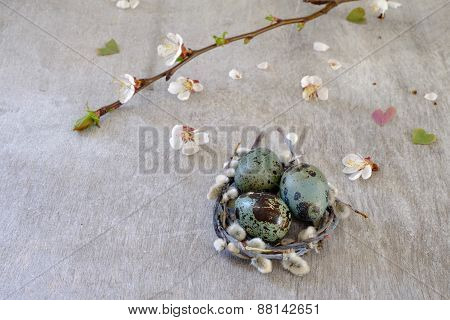 Quail Eggs In Shell And Without The Flowering Branch