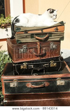 Old leather suitcases and cat