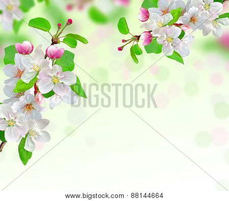 Spring Blossom On Nature Background