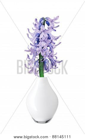 Blue Hyacinth In Vase Isolated On White