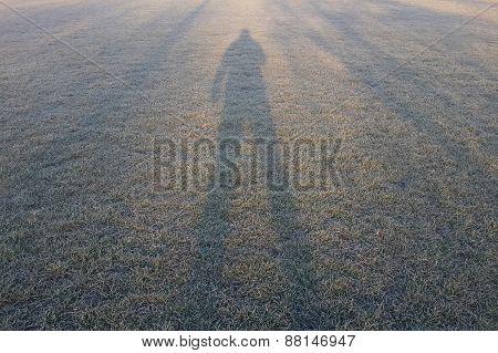 Grasswer