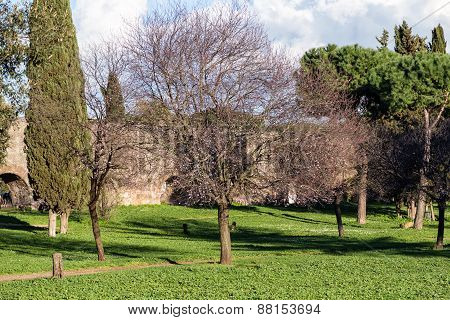 Cherry Tree And Other Trees In The Park Of Acquedotti In Rome